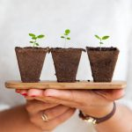 Organically Grow an Online Presence for Your Restaurant